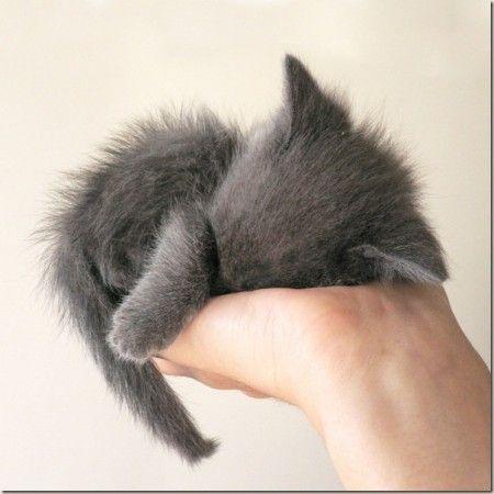 portable kitten