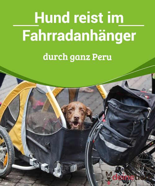 Hund Reist Im Fahrradanhanger Durch Ganz Peru Hund Reisen Hunde Fahrradanhanger Hund
