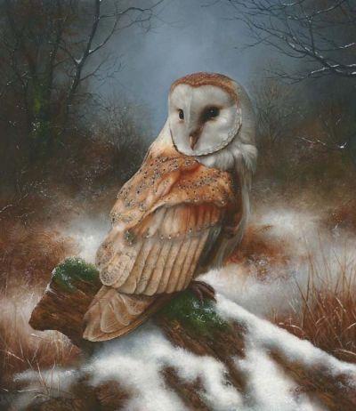 Barn Owl by Carl Whitfield
