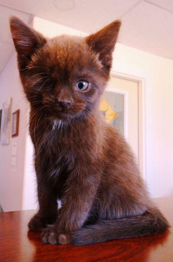 Âgé de 19 mois, Wesley est une future star des réseaux sociaux. Ce chat né avec un seul œil a été adopté par Rheanne Charise Taylor, une jeune femme de 27 ans qui vit dans l'Iowa. Elle lui a donné le surnom de «Chat Pirate»