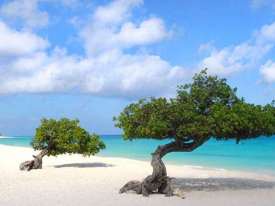 Eagle Beach é uma região popular de Aruba, com áreas para piquenique à sombra, cabanas e uma variedade de esportes aquáticos Foto: Shutterstock