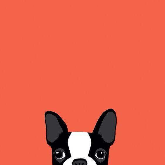 赤背景におしゃれでかっこいいフレンチブルドッグ犬