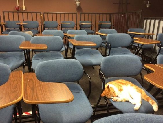 Ginger Cat Bubba Loves School So Much They Issue Student Body Card for Him - Love Meow