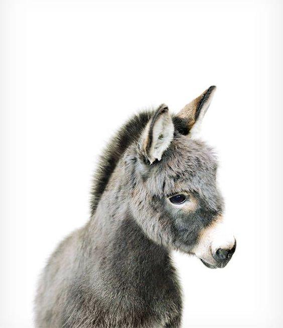 Impresión de burro bebé, vivero de animales de granja, The Crown Prints, decoración de vivero única, vivero de animales de zoológico, póster de burro, arte de la habitación del bebé, vivero