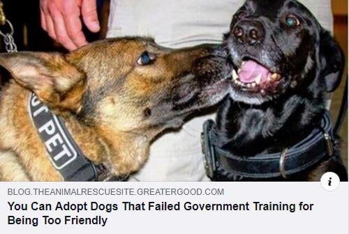 A Good Boy Is Always A Good Boy Dogs Dog Fails Adoption