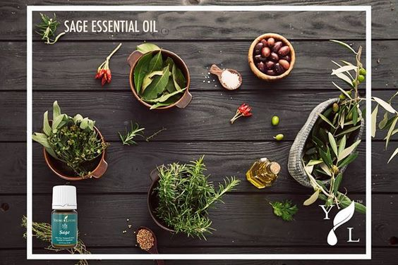 Sage essential oil Sage essential oil is steam distilled from the leaves of the Salvia officinalis plant. Try substituting it in recipes that call for the dried herb sage to help support overall wellness. Sage pairs well with Thyme, Clary Sage, Clove, Frankincense, and Basil.