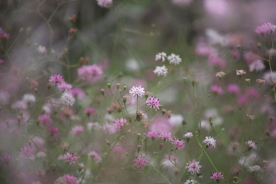A Plethora Of Pink by Jo Lynn Zamudio
