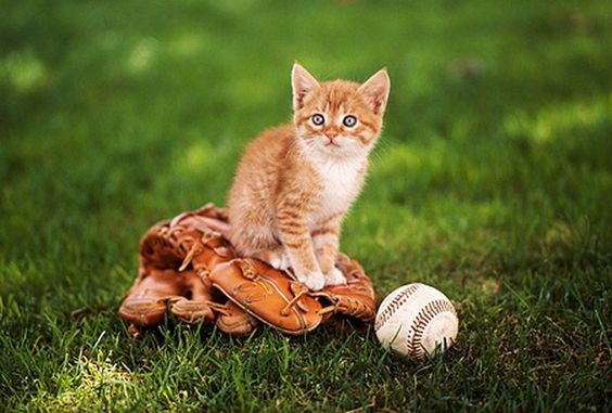 A Gallery of Cats Who Love Baseball