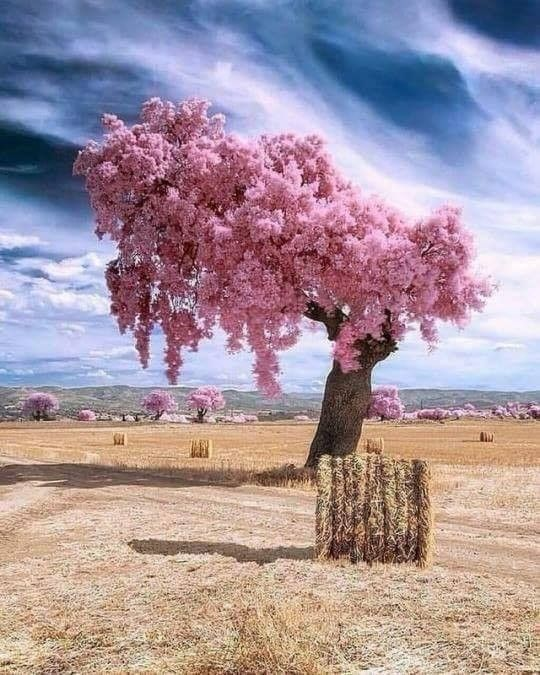 Top 25 Nature Views Of All Time Visit Now Pink Blossom Tree Cool Pictures Of Nature Blossom Trees