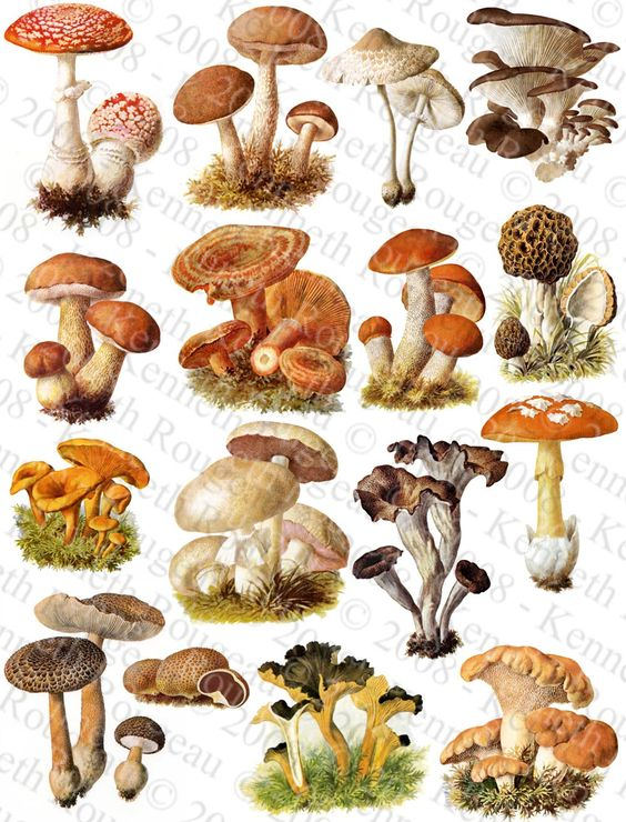 9 Delicious Types of Edible Mushrooms