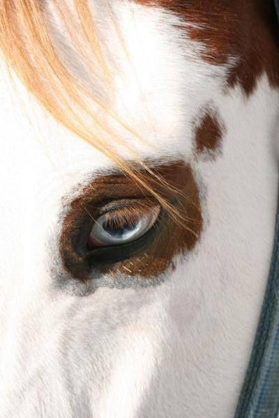by ƱAmor por los caballos overosƱ ojos zarco