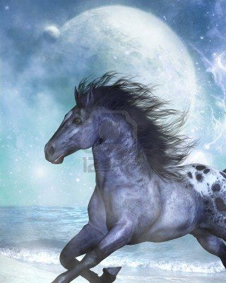 cavalli selvaggi al galoppo - Google-Suche