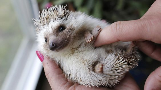 Calling all hedgehog lovers! TODAY wants to see your unusual pets:
