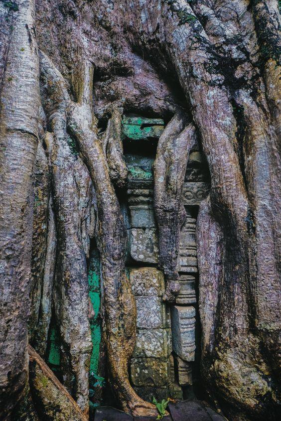 Chùm rễ khác biệt nhất trong quần thể của ngôi đền