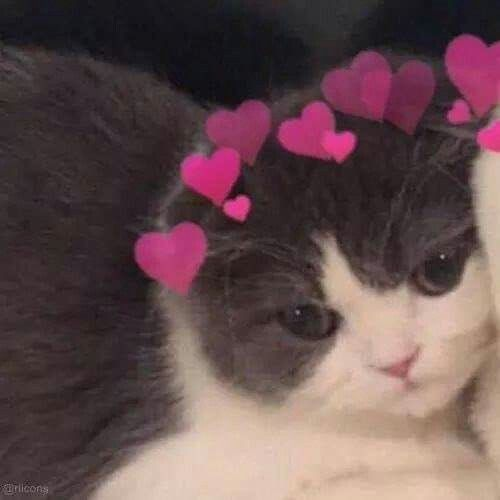 Pin By 𝓶𝓲𝓴𝓪𝓼𝓪 On Metadinhas Cat Icon Cute Cat Wallpaper Cute Cat Memes