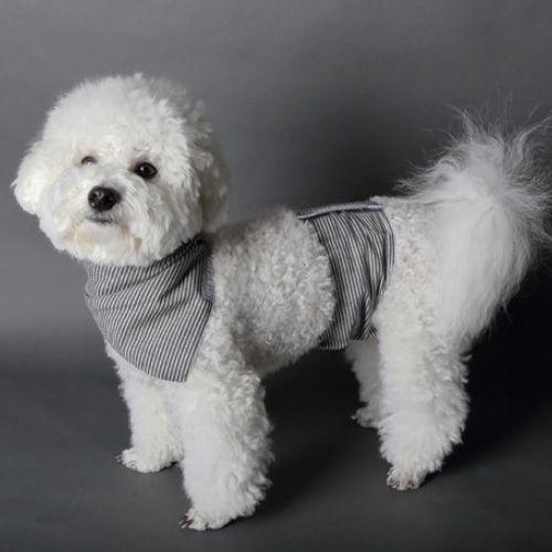 Dog Manner Belt