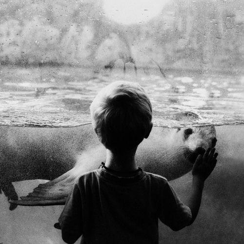 boy + seal.