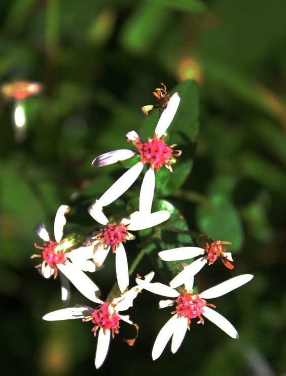 image of white and red wildflowers