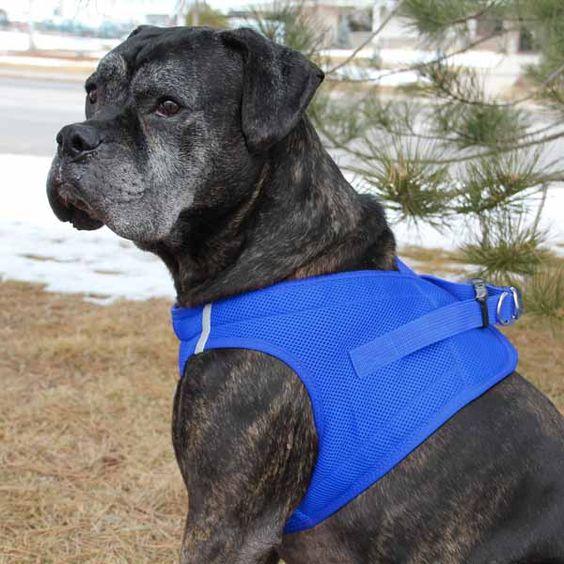 Blue American River Ultra Choke Free Dog Harness