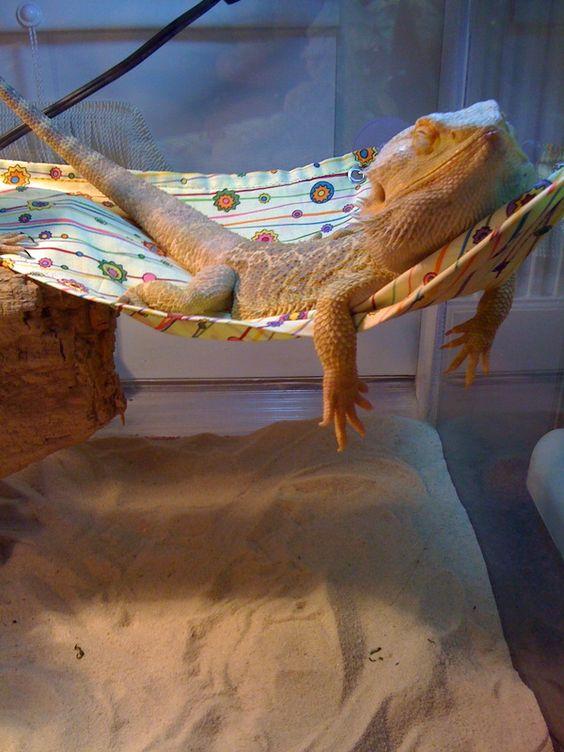 ハンモックで眠るかわいいトカゲの壁紙