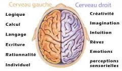 """Résultat de recherche d'images pour """"onde cérébrale"""":"""
