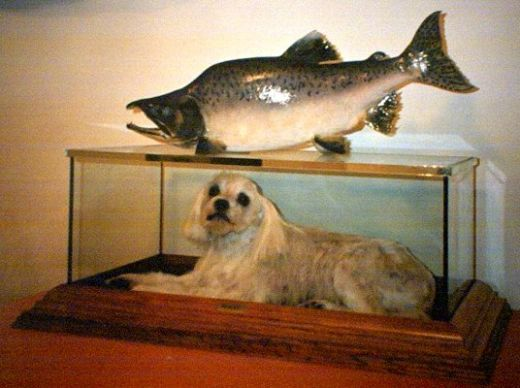 Vinyl besides Not All Taxidermy Belongs On Display 23 Photos also Trophy Room Bankfontein together with Funny Dog Pictures likewise 391041525894. on taxidermy shop ideas