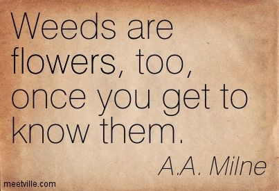 A.A. Milne: Weeds are flowers, too, once you get to know them.