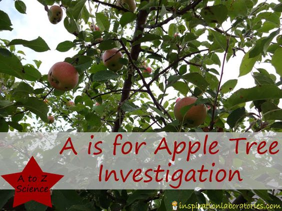 A is for Apple Tree Investigation - the start of a toddler and preschool science series at Inspiration Laboratories