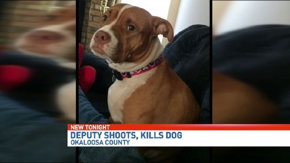 A Crestview family is devastated after a deputy shot and killed their dog early Sunday morning around 3 a.m.It happened along Farmer Street in Crestview.The deputy says he was in danger but the family says the deputy pulled the trigger too soon.What she d
