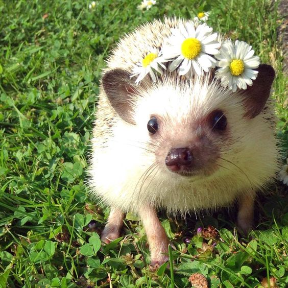 Peace, love, & Hedgies:
