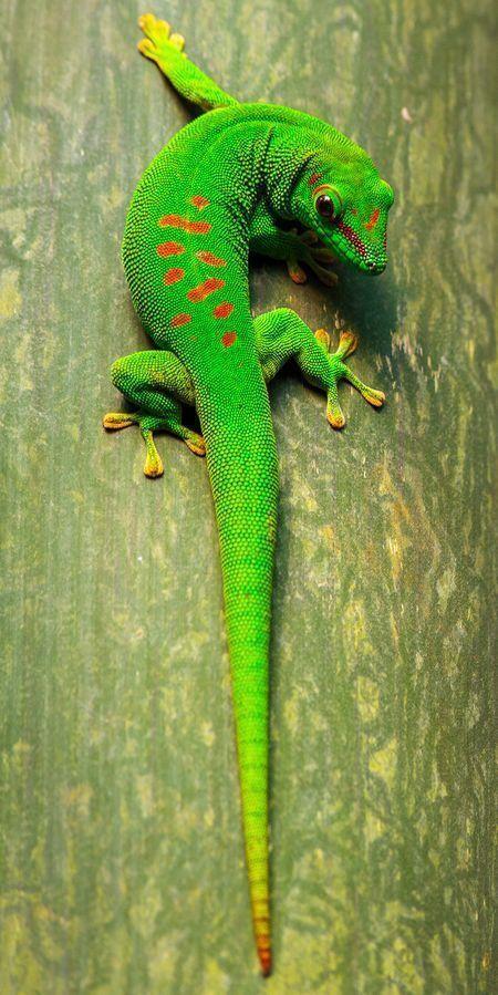 All Animals Tiere Regenwald Tiere Reptilien Und Amphibien