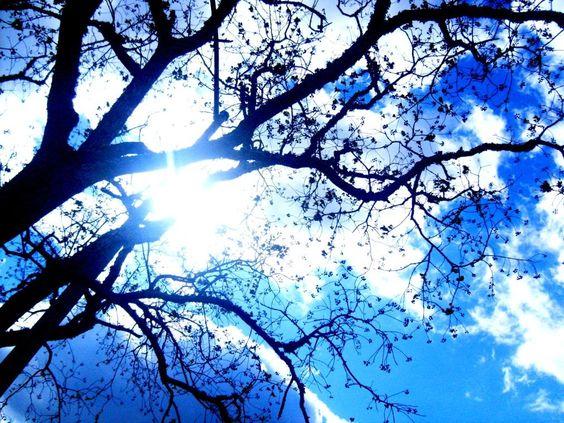 peek a boo sky blue pinterest sky and trees. Black Bedroom Furniture Sets. Home Design Ideas