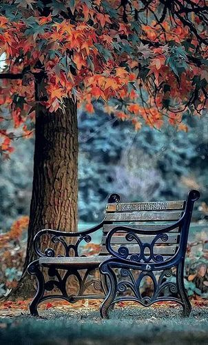 Bench In The Autumn Park Bright Colors Beautiful Images And Wallpapers Dslr Background Images Blur Photo Background Background Images Hd