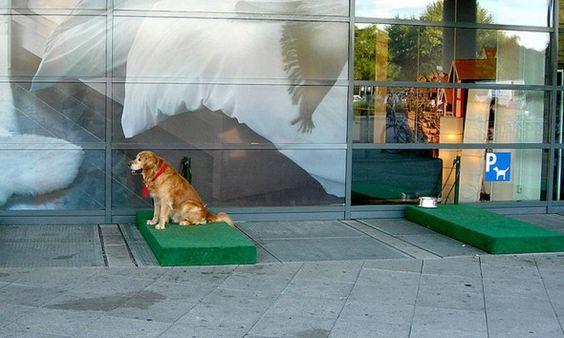 Estacionamento para cães esperarem seus donos na Alemanha - AC Variedades