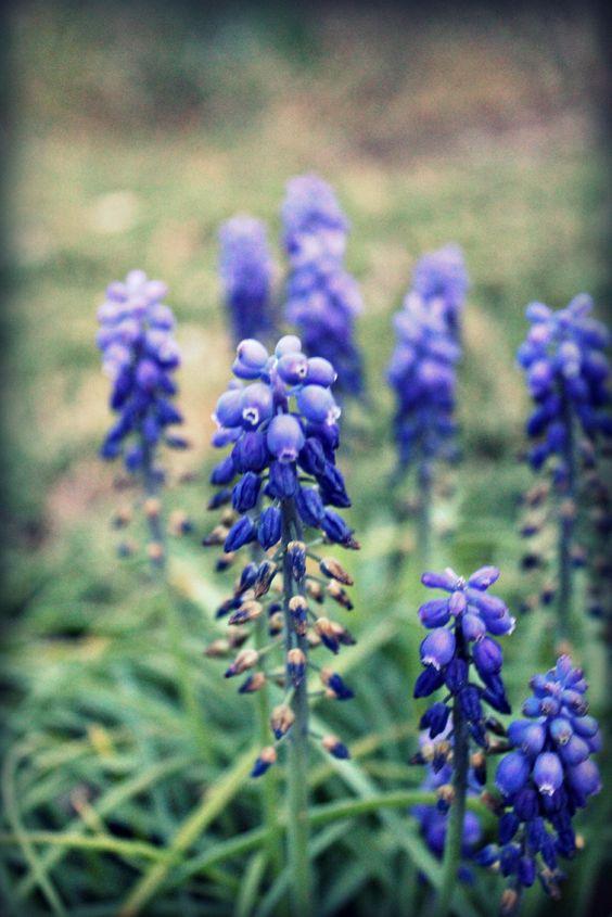 Purple Flowers :-)