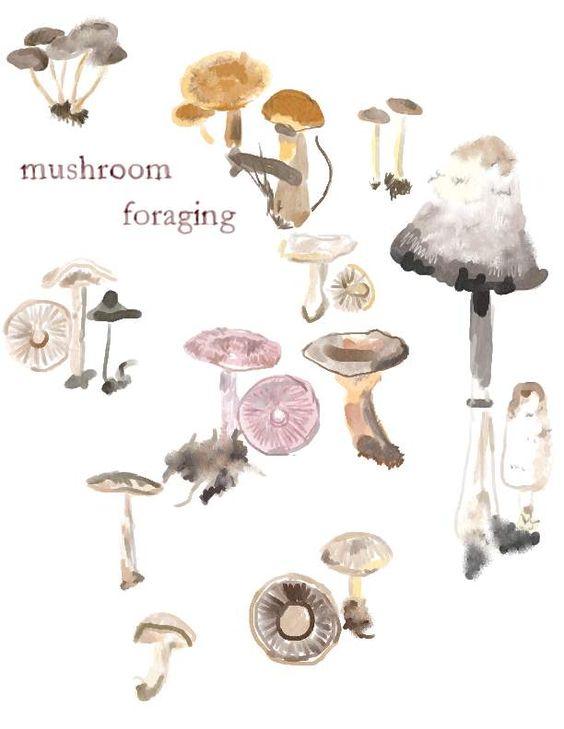 lava mushrooms