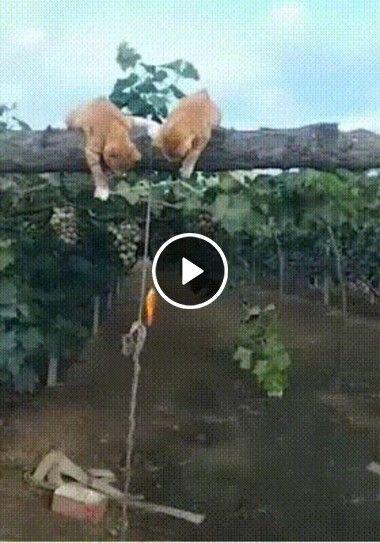 Amigos pescando na arvore