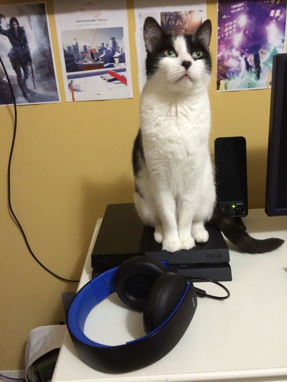 """""""No games until you feed me..."""""""