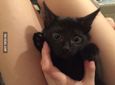 I call her Toothless