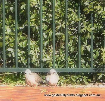 Golden Lilly Crafts Spotted grey doves, love birds
