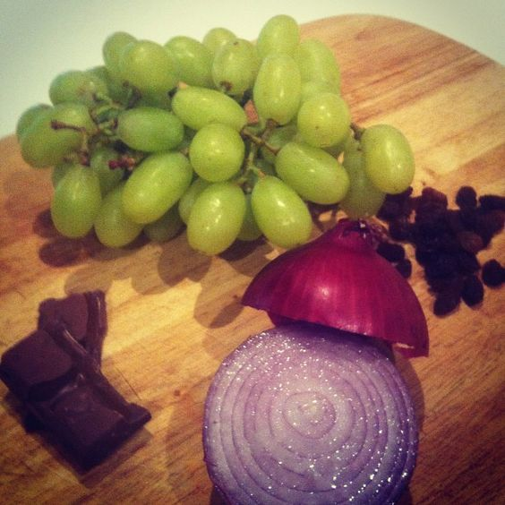 TOXIC foods for dogs include grapes, sultanas, onions and chocolate. #dognutrition #puppytales