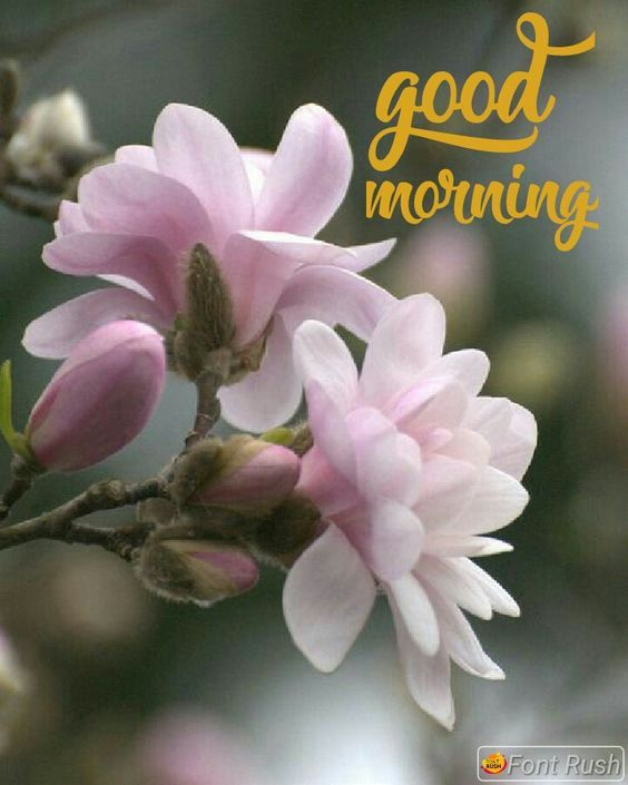 60 Most Beautiful Good Morning Images With Flowers Good Morning
