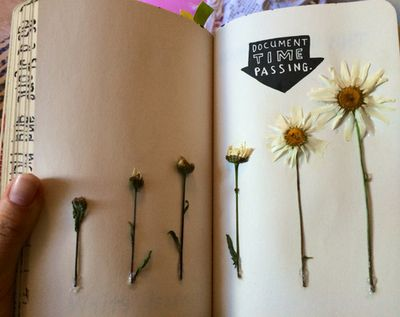 wreck this journal, flowers, document time passing