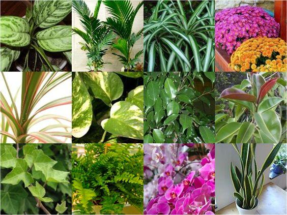 Resultado de imagem para PLANTAS PURIFICADORAS