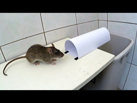 How To Get Rid Of Mice In The House Australia