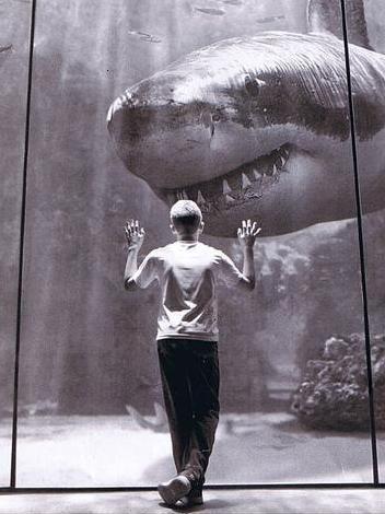 水族館のホホジロザメ