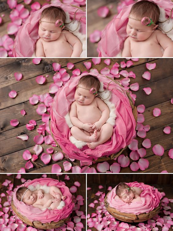 Newborn Professional Photos Seattle pink rose petals: