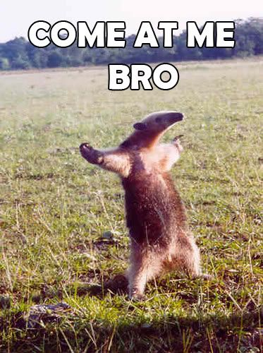Come at me, bro!  Love an ant eater with an attitude...lmao