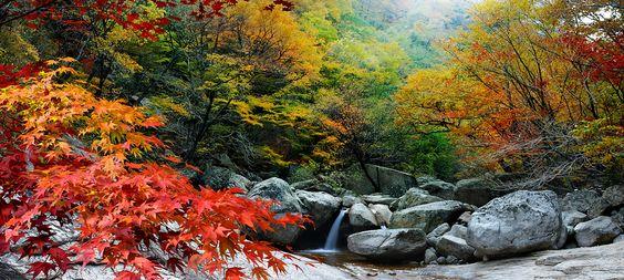 Những cây lá ở núi Jirisan bắt đầu đổi sắc
