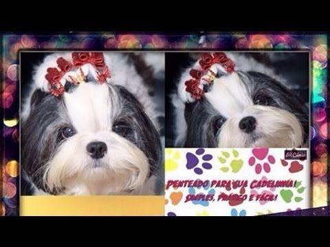 Penteado para sua cadelinha: Simples e prático para o dia a dia! - YouTube